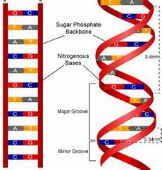 dna robynsrevision
