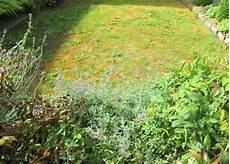 Moos Im Rasen Entfernen 187 Die 10 Besten Tipps