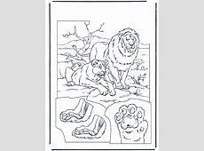 Lions 1   Fargeleggingstegninger katteaktige dyr