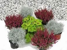 balkonpflanzen herbst winter grabbepflanzung einzelgrab wechselbepflanzung herbst