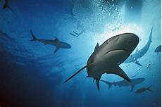 Pengetahuan Tentang Jenis Ikan Penemuan Spesies Baru Ikan