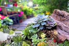 Preparing A Succulent Garden Bed How To Prepare Soil For