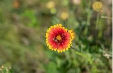 Malvorlage Biene Und Blume Umfassende Blume Und Eine Biene Stockbild Bild