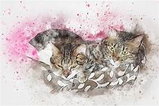 Sketsa Gambar Kucing Duduk Koleksi Gambar Hd