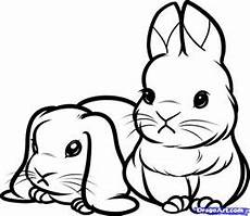 printable coloring pages of baby bunnies bunny drawing
