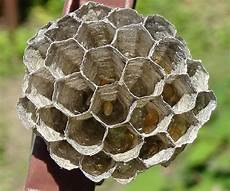 petit nid de guepe mon petit nid de gu 234 pes