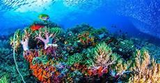 Pemandangan Bawah Laut Di Indonesia Ini Menakjubkan