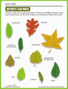 science worksheets leaves 12281 leaf shapes worksheet education