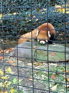 animal worksheets in 13905 ross park zoo binghamton 2018 all you need to before you go with photos tripadvisor