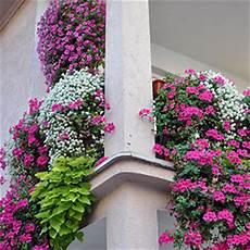 blumen für südbalkon blumen f 220 r balkonk 228 sten sonnig nxsone45