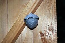 mittel gegen wespen im dach mittel gegen wespen im dach genial hornissen oder wespen
