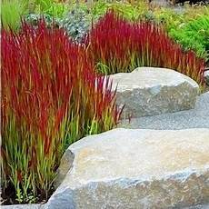 gräser im steingarten ziergr 228 ser im topf f 252 r terrasse und balkon gartenzeit