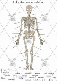 teacher s pet activities games 187 human skeleton