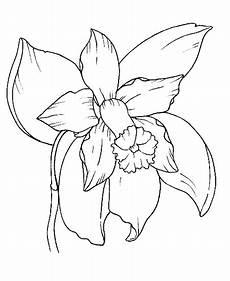 dibujos de la flor nacional de venezuela imagenes de la flor nacional de colombia para dibujar imagui