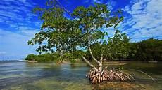 Buah Manis Penyelamatan Hutan Mangrove Pandansari Brebes
