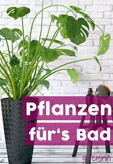 Indirektes Licht Hohe Luftfeuchtigkeit Diese 7 Pflanzen