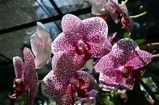 comment soigner une orchid 233 e orchids plants nature