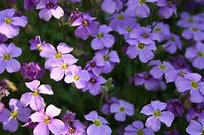 blumen klein names of purple flowers with pictures 31 background