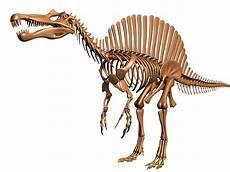 dinosaur skeleton spinosaurus dino 3d model spinosaurus