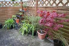 endlich ausgewintert alle pflanzen d 252 rfen raus 187 majas