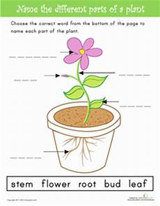 science worksheets about plants for grade 1 12109 name the parts of a plant parts of a plant plants parts of a flower
