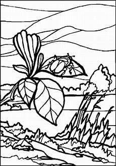 kaefer auf einem blatt ausmalbild malvorlage landschaften