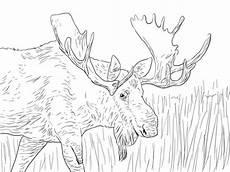 alaska animals coloring pages 16895 coloriage orignal d alaska coloriages 224 imprimer gratuits
