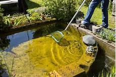 algen am haus entfernen algen im teich diese tipps helfen