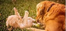 des produits toxiques retrouv 233 s dans les aliments pour chiens sciences et avenir