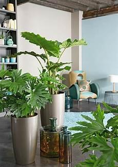 pflanzen für wohnzimmer feng shui pflanzen f 252 r harmonie und positive energie im