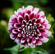 Fleurs Les Plus Belles
