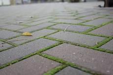 moos steinen entfernen moosvernichter f 252 r die terrasse anleitung zur richtigen