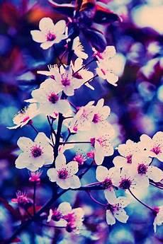 flower wallpaper for phone screen phone wallpaper beautiful floral design flowers floral