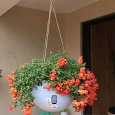hanging plastic flower pots hanging pots flower pot with