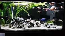 Aquarium 360l Liter Neu Einrichten Raumteiler Fish Tank