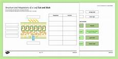leaf structure and function worksheet ks3 cut and stick resource