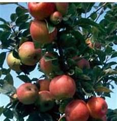 Choisir Un Arbre Fruitier Pour Balcon 171 Jardinage Fm