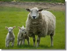 Gambar Binatang Haram Dan Alasannya Gambar V