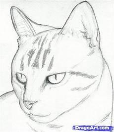Malvorlagen Katzenkopf Malvorlagen Katzenkopf