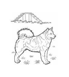 ausmalbilder hunde malvorlagen kostenlos zum ausdrucken