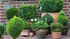 Pflanzkübel Modern Bepflanzen - k 252 belpflanzen im fr 252 hling brauchen k 252 belpflanzen