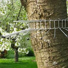 katzenabwehrgürtel selber bauen schwegler katzenabwehrg 252 rtel gro 223 115 cm vogelschutz