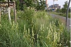 staudenpflanzung im park am gleisdreieck b 252 ro