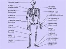 skeleton printable worksheets printables scholastic