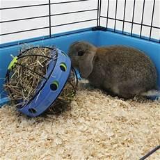 bunny jouet pour lapin zooplus