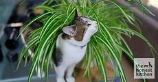 5 Pet Safe Plants For Your Home The Honest Kitchen