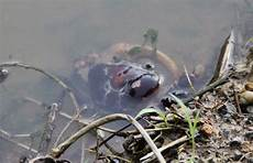 Bego Ceritaku Mencari Ikan Di Sungai Wendit