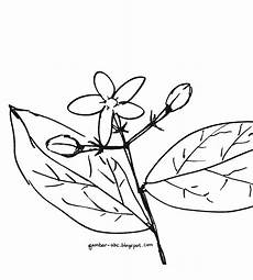 Gambar Mewarnai Bunga Melati Mudah Sederhana Contoh