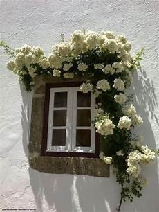 fioriere per davanzale finestra bright white white it can be so colorful
