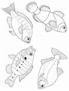 Malvorlagen Fische Jung Die 37 Besten Bilder Ausmalbilder Fische